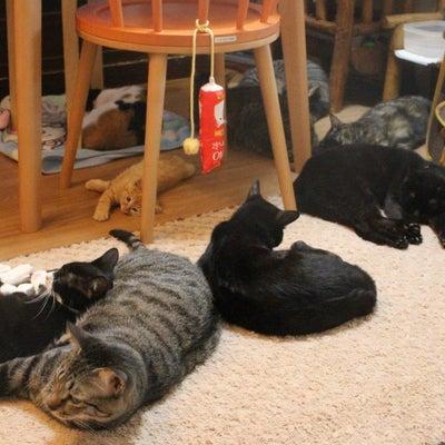わが家の猫カフェタイムです・・はじめてのちゅ~る編の記事に添付されている画像
