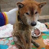 ★愛媛県新居浜市★迷い犬を保護しています!の記事に添付されている画像