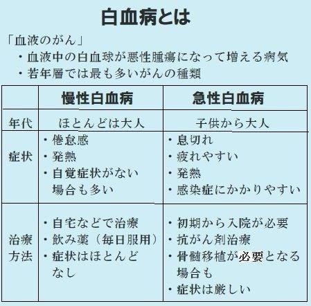 白血病 池江璃花子選手 柴犬三郎 回顧 と茶々丸一家
