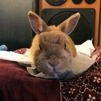 怒るウサギの記事に添付されている画像