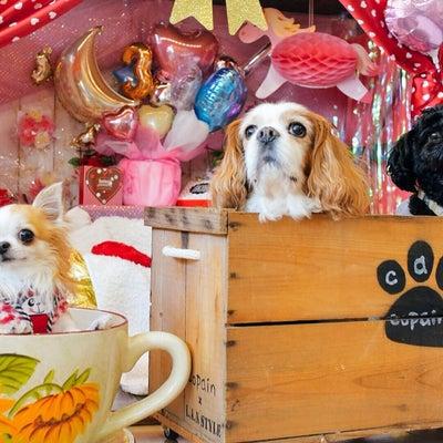 ドッグカフェ コパンさん♡の記事に添付されている画像