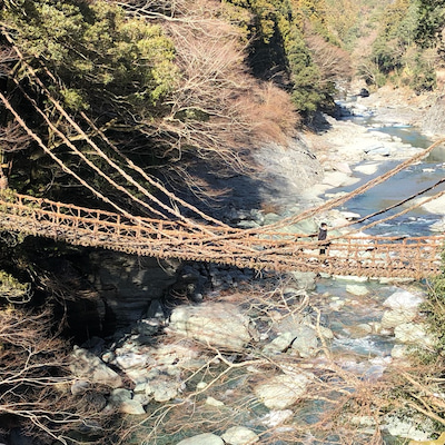 徳島の旅・恐怖の『かずら橋』の記事に添付されている画像