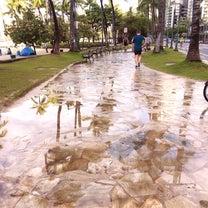 雨とムチ!?雨だっていいやッと思える、こういうところがハワイの素敵なところ♪&世の記事に添付されている画像
