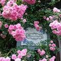 #花好きな人と繋がりたいの画像