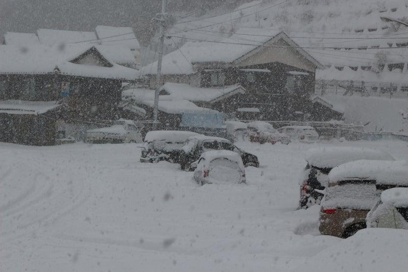 ない 今年 は 雪が 降ら