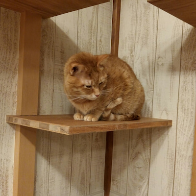 今日の猫部屋の記事に添付されている画像