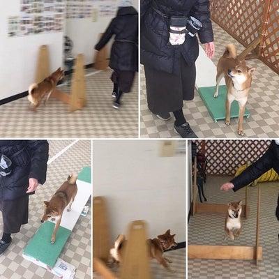 ドッグトレーニング コーナンJR宇治駅北の記事に添付されている画像