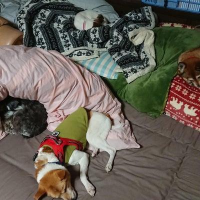犬のしつけについて考えてみた ~Teamぐだぐだ~の記事に添付されている画像