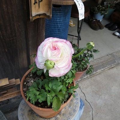 神社の花たちの記事に添付されている画像