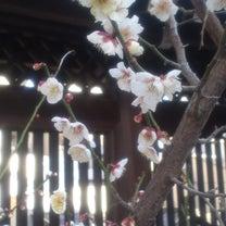 恋愛タイプ別ラブ運アップ術!2/15~2/21の記事に添付されている画像