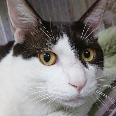 保護犬カフェだけど保護猫ちゃん達も居るよー!今月と来月は猫ちゃん卒業強化月間ですの記事に添付されている画像