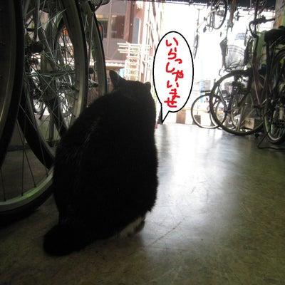 自転車 ぞくぞくと入荷!の記事に添付されている画像