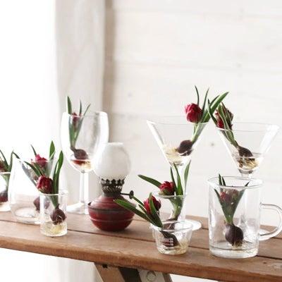 ★ダイソー100円グラスで球根テラリウムを楽しもう♪の記事に添付されている画像