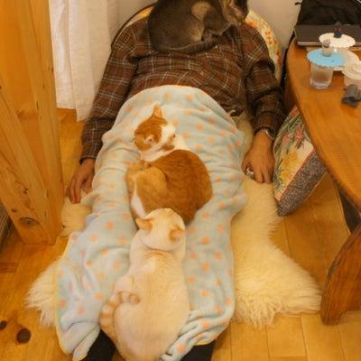 猫まみれの苦しみの記事に添付されている画像