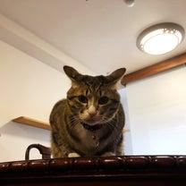 猫の嫌がらせの記事に添付されている画像