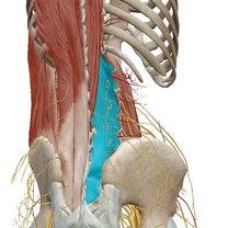 症例報告 〜腰椎すべり症・腰の痛み・足の痺れ〜の記事に添付されている画像
