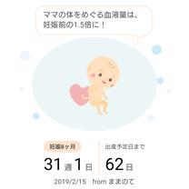 妊娠8ヶ月最終週の記事に添付されている画像