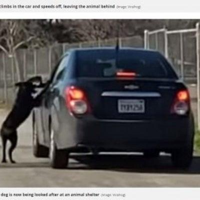 泣けてくる・・・ 捨てようとする飼い主に殴られてもすがりつく犬の記事に添付されている画像