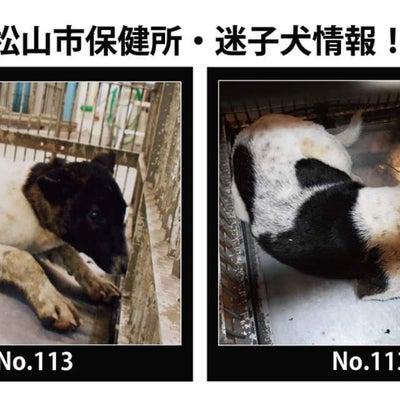 松山市保健所・迷子犬情報!*No.113雑種犬 松山市太山寺町の記事に添付されている画像
