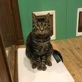 #CATの画像