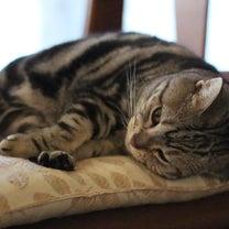 PC不良でも猫は元気です。の記事に添付されている画像
