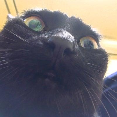 間近でネコの写真を撮ってみましたの記事に添付されている画像