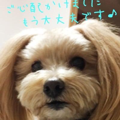 ☆RAMULAND☆の記事に添付されている画像