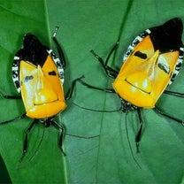 虫と花の記事に添付されている画像