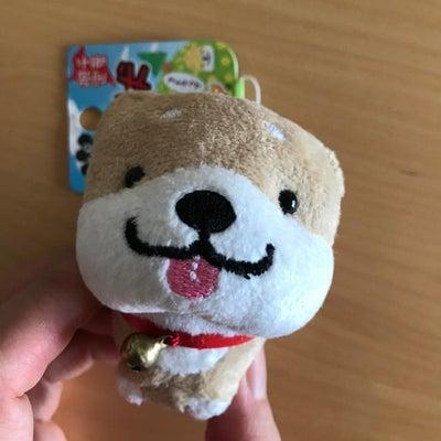 千葉県の柴犬の記事に添付されている画像