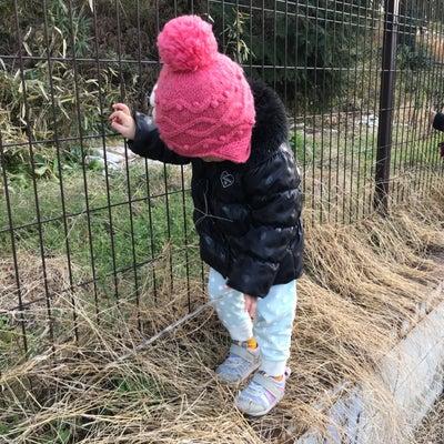 2歳三女の後追い…の記事に添付されている画像