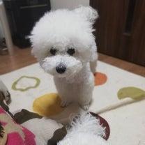 犬を飼うということ~留守番編の記事に添付されている画像