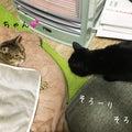 #猫の画像