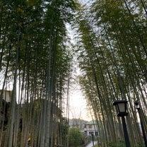 アルケミストの少年のように旅をして修善寺温泉に帰ってきましたの記事に添付されている画像