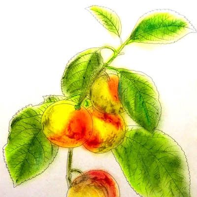 花とフルーツ編 クレパスで塗るの記事に添付されている画像
