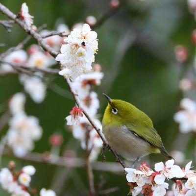 庭に来た鳥の記事に添付されている画像