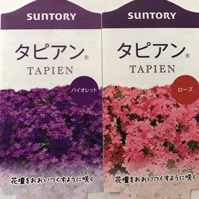 タピアンを植えるの記事に添付されている画像