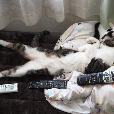 大人猫レアくん7年273日 おねむまーちゃんの記事に添付されている画像