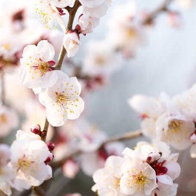 梅の花とともに ほころぶ春 *3月のスケジュール*の記事に添付されている画像