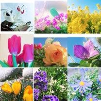 今のわたしの花言葉の記事に添付されている画像