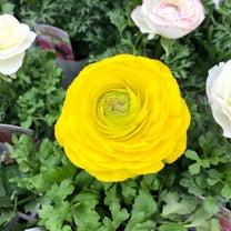 ☆ココロに届く四季の花☆no.4〜♪お花のある暮らし *☆春待ち遠し*☆多度町のの記事に添付されている画像