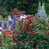 花に囲まれた生活は…の記事に添付されている画像