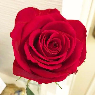 運気アップの薔薇の花の記事に添付されている画像