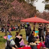 横浜自宅近くの小さな公園で、毎年梅まつり!の記事に添付されている画像