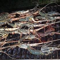 永遠の海のアイドル。釣って、食べる、生き物に感謝。の記事に添付されている画像