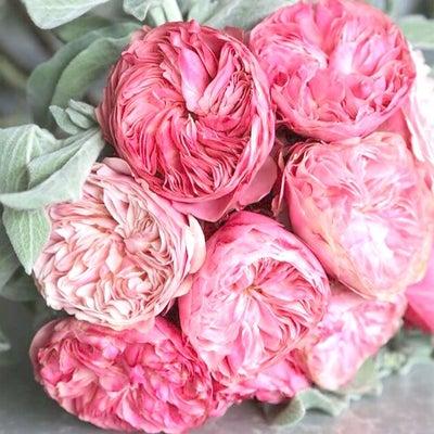 心を込めて蒔いた種を育て続ける。 ♡ 踏み潰したら芽は出ないのです。の記事に添付されている画像