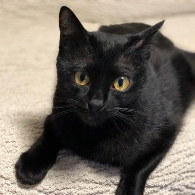 黒猫さやまの記事に添付されている画像