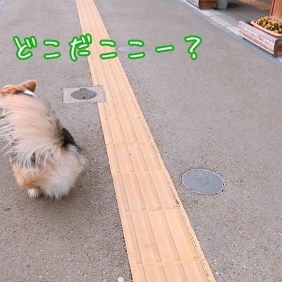 選抜☆お出かけコギ散歩①の記事に添付されている画像