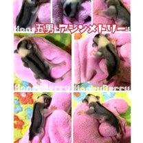 気になる五男(*ÒωÓ*)ムムッ!!の記事に添付されている画像