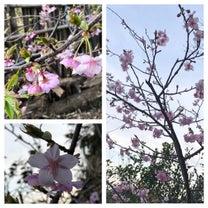 山桜が咲きましたの記事に添付されている画像