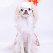 角耳っこメーカーで愛犬を擬人化の記事に添付されている画像